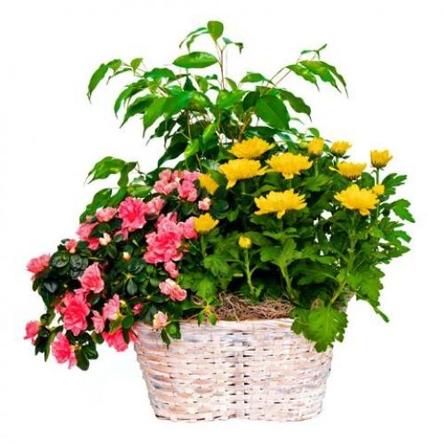 Composizione piante fiorite