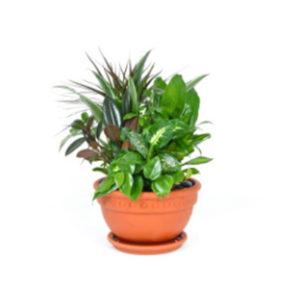 Composizione piante verdi